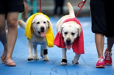 В Бангкоке собаки поучаствовали в марафоне и помогли людям