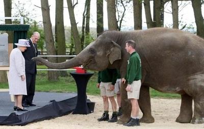 В Великобритании слоны удостоились королевского обеда