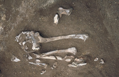 Археологи о медведях